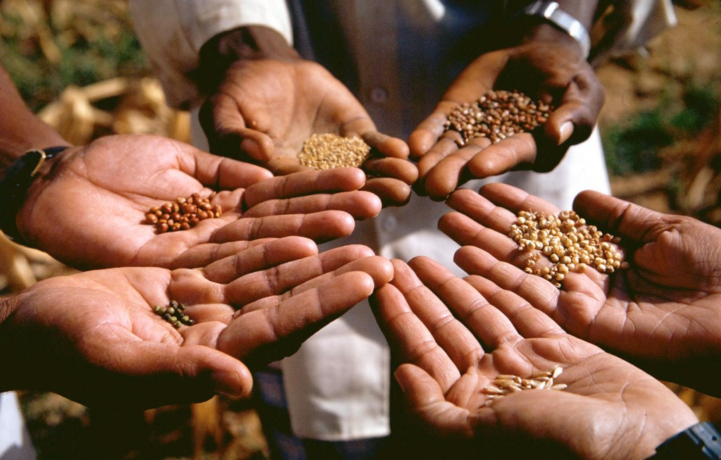Hands showing seeds from around the world.